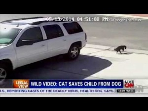 Hero Cat Saves Young Boy From Dog